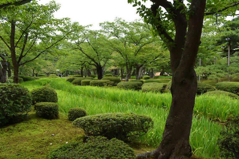 Japanese-Cloud-topiary-and-dry-stream-C